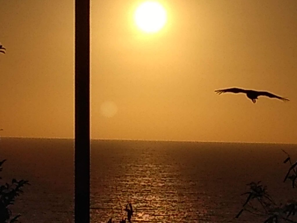 Flying into the Sunset over LasPlayas, Acapulco 2019